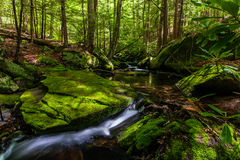 Mossy creek in the Catskills Royalty Free Stock Photo