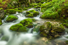 Mossy creek Stock Photos