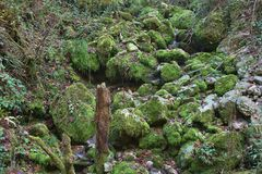 Mossy creek in the Glasenbach gorge in autumn, Salzburg, Austria. royalty free stock photos