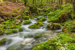 Mossy creek Royalty Free Stock Photography