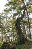 Mossy dead tree Stock Photo