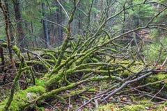 Mossy dead tree Royalty Free Stock Photo