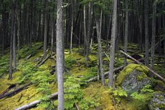 Mossy Deep Forest Royalty Free Stock Photos