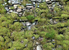 Mossy dry stone wall Stock Images