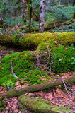 Mossy Fallen Tree Stock Images