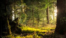 Mossy field in forest Royalty Free Stock Photo