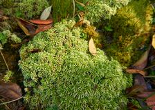 Mossy floor in the forest, Phukradueng, Thailand. Beauty in the nature stock photo