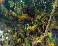 Mossy forest Stock Photography