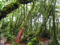 Mossy forest Stock Image