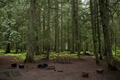 Mossy Forest Campground Stock Photos