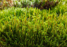 Mossy forest floor Stock Photos