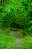 Mossy forest in floreana island galapagos Royalty Free Stock Image