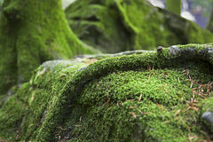 Mossy Forest Ground Stock Images