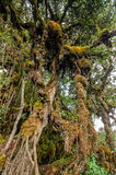 Mossy Forest Stock Images