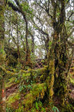 Mossy Forest Royalty Free Stock Photography