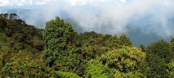 Mossy forest, Gunung Brinchang Stock Photos