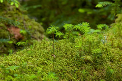 Mossy forest moss like a fairy tale Royalty Free Stock Photos