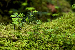 Mossy forest moss like a fairy tale Stock Photos