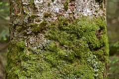 Mossy forest moss like a fairy tale Stock Photo