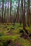 Mossy Forest of Mt.YATSUGATAKE Royalty Free Stock Photo