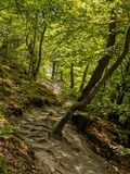 Mossy forest path of the Rheinsteig trail in Germany royalty free stock photo