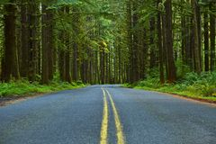 Mossy Forest Road Stock Images
