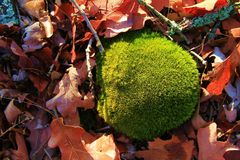 Mossy Forest Rock Stock Photo