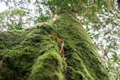 Mossy Forest in thailand Stock Image