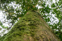 Mossy Forest in thailand Stock Photography