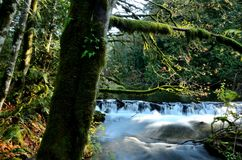 Mossy Forest & Water royalty free stock image