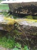 Mossy Fountain Stock Photo