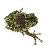 Mossy Frog, Theloderma corticale Stock Photo