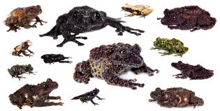 Mossy Frogs set on white Royalty Free Stock Images