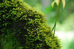 Mossy green Royalty Free Stock Image