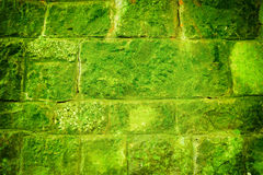 Mossy green brick wall Royalty Free Stock Photos