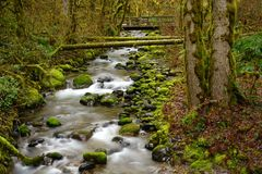Oregon Deep Forest Footbridge Mossy Rock River Flow Stock Photos
