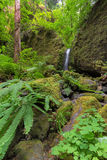 Mossy Grotto Falls with Plants in Spring Season Stock Photo