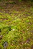 Mossy Ground Stock Image