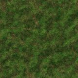 Mossy ground Royalty Free Stock Image