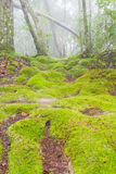 Mossy ground Royalty Free Stock Photos