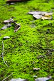 Mossy ground in national park in Thailand Royalty Free Stock Images