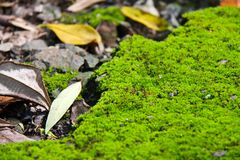 Mossy ground in national park in Thailand Stock Photos