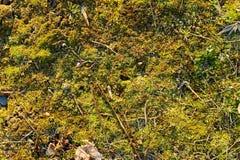 Mossy ground Stock Photo