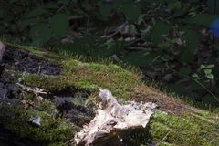 Moss and dried leave on fallen log Royalty Free Stock Photos