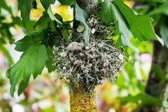 Mossy growth on tree Stock Photo