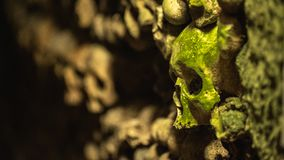 A mossy skull in the Catacombs of Paris stock photos