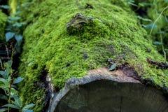 mossy journal Arkivfoto