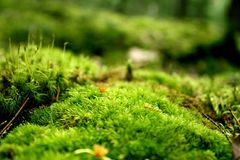 A Mossy Knoll Royalty Free Stock Photo