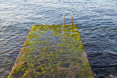 Mossy landing stage Stock Images