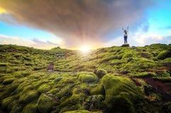 Mossy landscape sunrise Royalty Free Stock Image